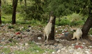 struinen in het afval