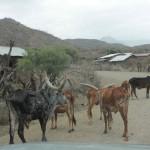 1 Gondar - Lalibela-020t