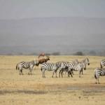 1) Turkana route met de groep-210t