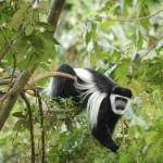 5.) Nechisar National Park-013t