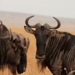 Masai Mara NP-046