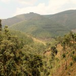 1 Onderweg naar Bwindi-007t
