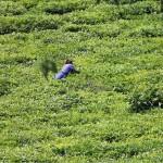 2 Rwanda Congo Nile 4x4 trail-005t