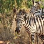 1 Noord Tanzania-034t