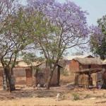 3 Zuiden Tanzania-059t