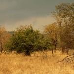 Akagera National Park-071t
