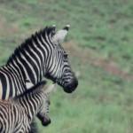 Akagera National Park-238t