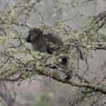 Akagera National Park-446t