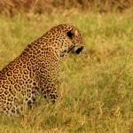 Header Akagera National Park-001