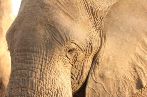 oog in oog malawi