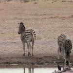 1 Rhino Sanctuary-119t