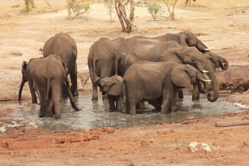 Elephant Sands in bad