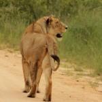 1 Krugerpark dag 1-019t