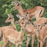 1 Krugerpark dag 1-068t