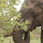 3 Krugerpark dag 3-039t