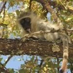 3 Krugerpark dag 3-053t
