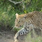 3 Krugerpark dag 3-055t