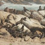 2t Westcoast Namaqua-066