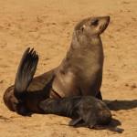 2t Zeehonden kolonie-166