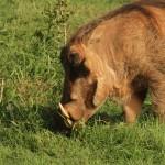 1t Addo Elephant Park-013