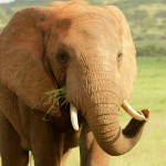 1t Addo Elephant Park-022