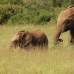 1t Addo Elephant Park-025