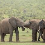 1t Addo Elephant Park-069