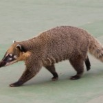 t1 Brazilie dieren Iguazu-011