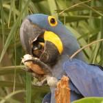 t Pantanal_165