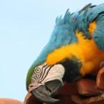 t Pantanal_272