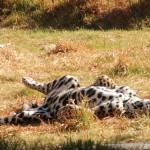 11 Mallasa Zoo. Mallasa Zoo-063