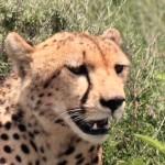 t1 Ngorongoro NP_530