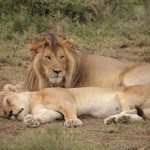 t1 Ngorongoro NP_729
