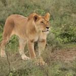 t1 Ngorongoro NP_758