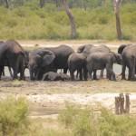 t5 Khoudom Game Reserve _023