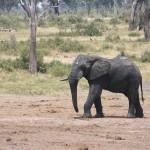 t5 Khoudom Game Reserve _043