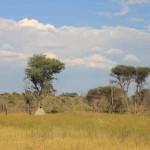 t5 Khoudom Game Reserve _164