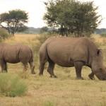 t7 Khama Rhino dag 1_110