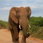 t1 Addo Elephants Park_172