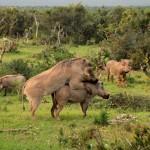 t1 Addo Elephants Park_195