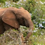 t1 Addo Elephants Park_208