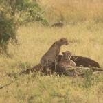 t1 Kruger Malelane_085
