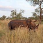 t1 Kruger Malelane_127