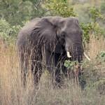 t1 Kruger Malelane_254