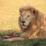 t1 Lion Park_183